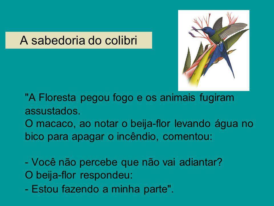 A sabedoria do colibri