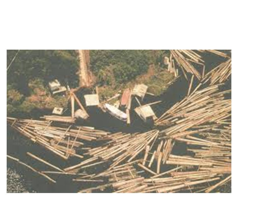 1988 É promulgada a Constituição de 1988, a primeira a dedicar capítulo específico ao meio ambiente.