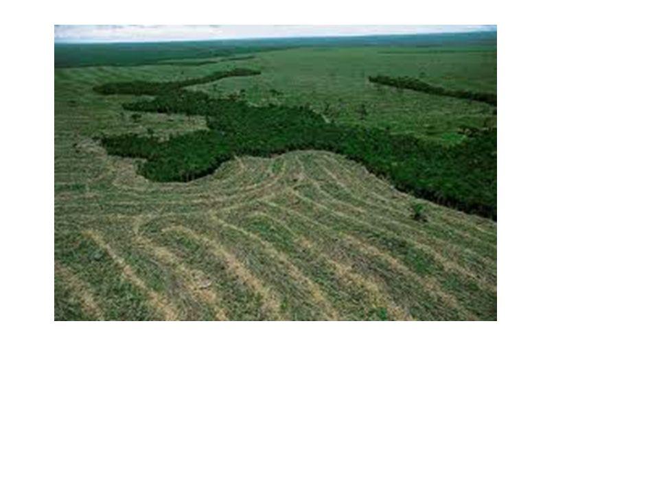 2000 Surge a Lei do Sistema Nacional de Unidades de Conservação (Lei nº 9.985/00), que prevê mecanismos para a defesa dos ecossistemas naturais e de preservação dos recursos naturais neles contidos.