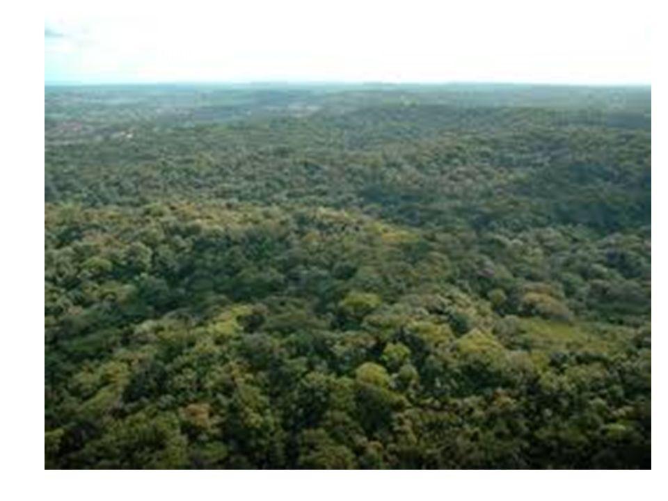 1799 É criado o Regimento de Cortes de Madeiras, cujo teor estabelece rigorosas regras para a derrubada de árvores.
