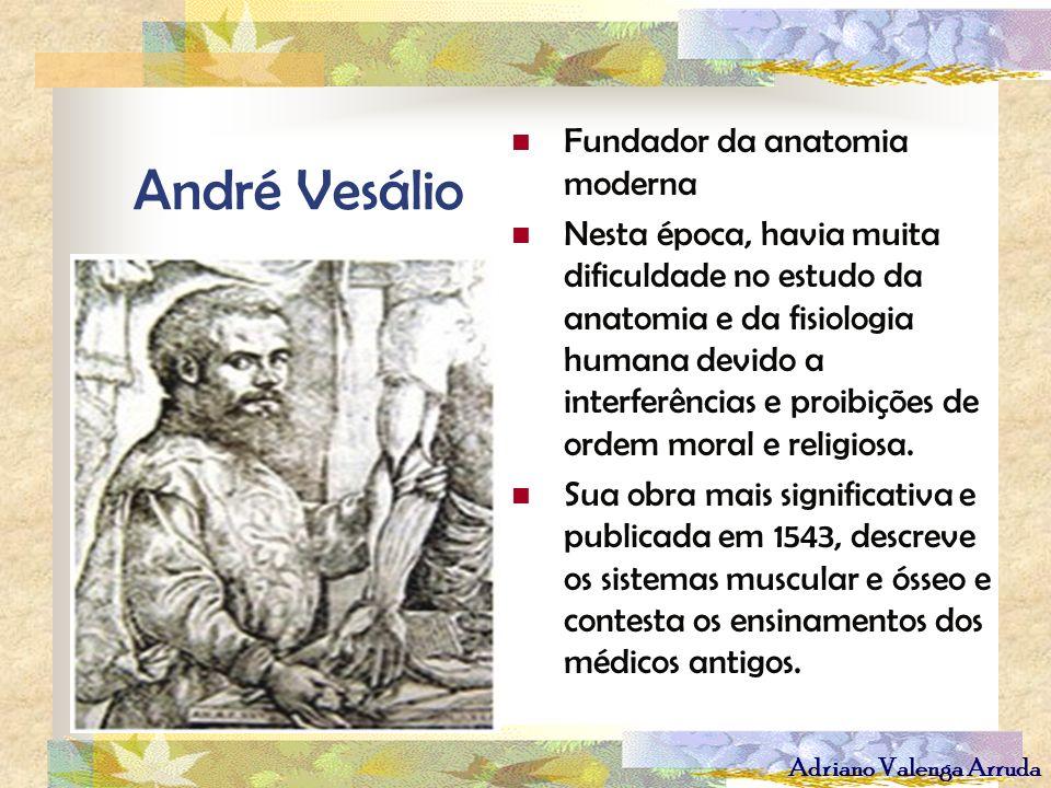 Adriano Valenga Arruda André Vesálio Fundador da anatomia moderna Nesta época, havia muita dificuldade no estudo da anatomia e da fisiologia humana de