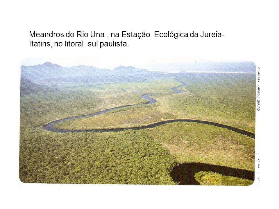 Meandros do Rio Una, na Estação Ecológica da Jureia- Itatins, no litoral sul paulista.
