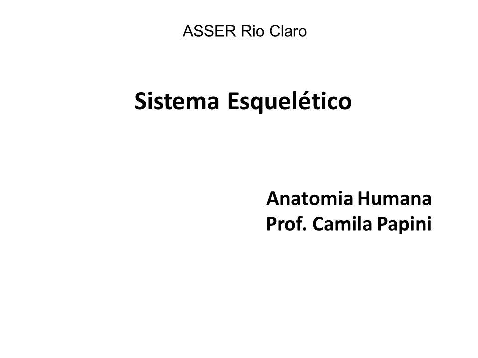 Anatomia Humana Prof. Camila Papini ASSER Rio Claro Sistema Esquelético
