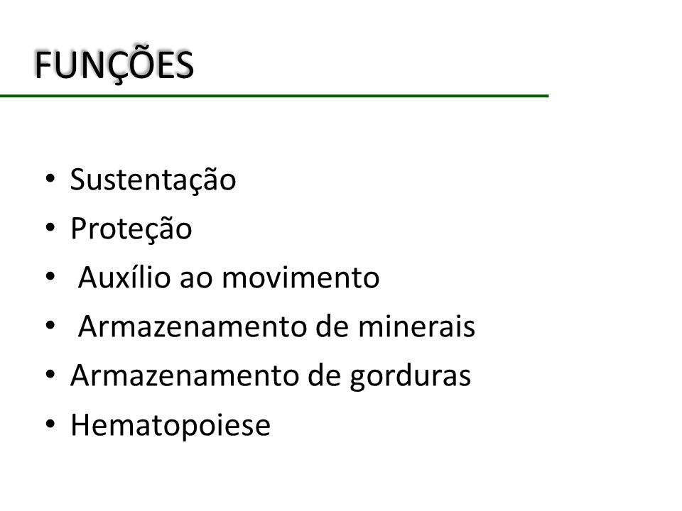 FUNÇÕES Sustentação Proteção Auxílio ao movimento Armazenamento de minerais Armazenamento de gorduras Hematopoiese