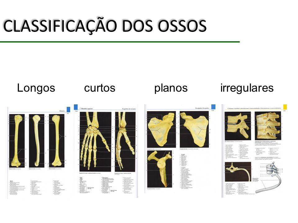 CLASSIFICAÇÃO DOS OSSOS Longos curtos planos irregulares
