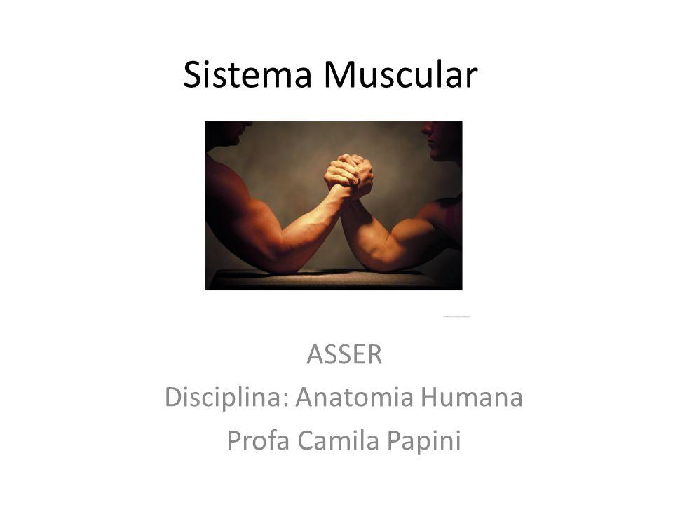 Sistema Muscular ASSER Disciplina: Anatomia Humana Profa Camila Papini