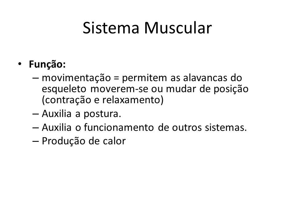 Sistema Muscular Função: – movimentação = permitem as alavancas do esqueleto moverem-se ou mudar de posição (contração e relaxamento) – Auxilia a post