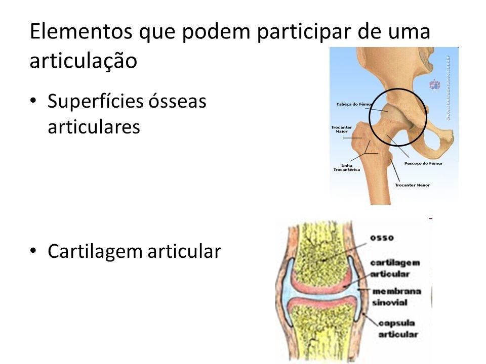 Elementos que podem participar de uma articulação Superfícies ósseas articulares Cartilagem articular
