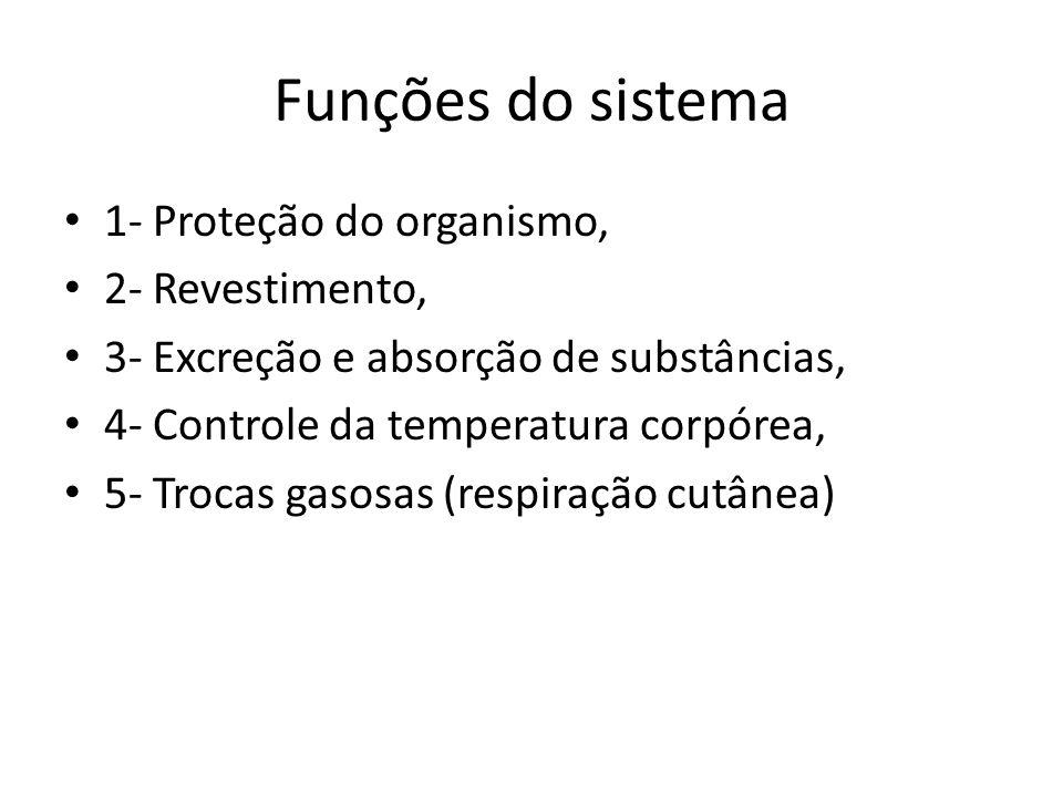 Funções do sistema 1- Proteção do organismo, 2- Revestimento, 3- Excreção e absorção de substâncias, 4- Controle da temperatura corpórea, 5- Trocas ga