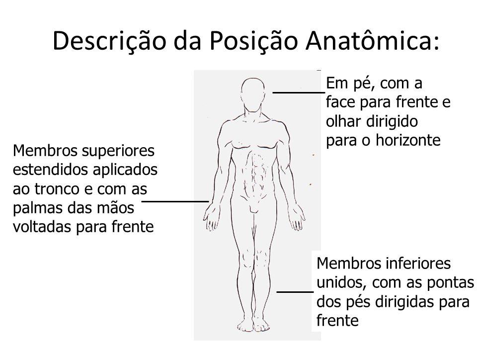 Descrição da Posição Anatômica: Em pé, com a face para frente e olhar dirigido para o horizonte Membros inferiores unidos, com as pontas dos pés dirig