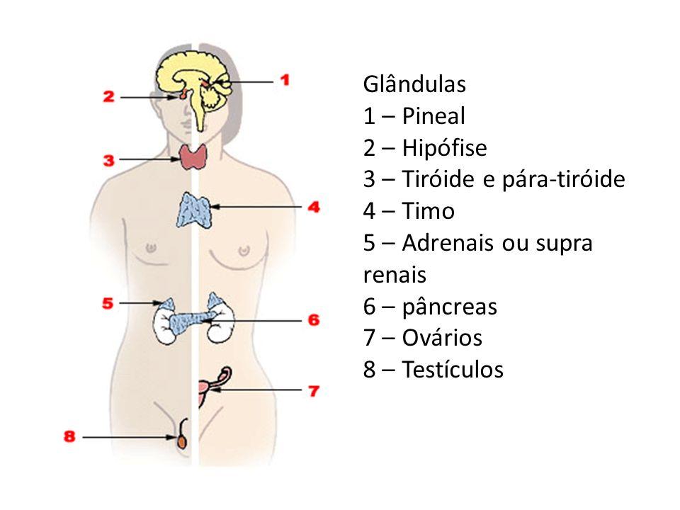 Glândulas 1 – Pineal 2 – Hipófise 3 – Tiróide e pára-tiróide 4 – Timo 5 – Adrenais ou supra renais 6 – pâncreas 7 – Ovários 8 – Testículos