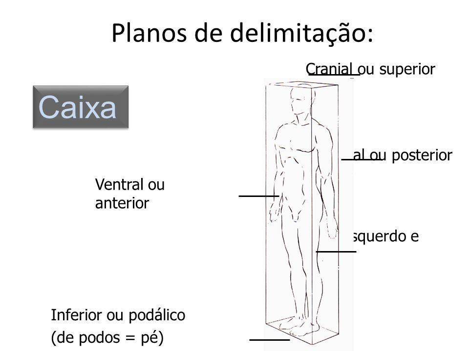 Planos de delimitação: Cranial ou superior Dorsal ou posterior Lateral esquerdo e direito Inferior ou podálico (de podos = pé) Ventral ou anterior Cai