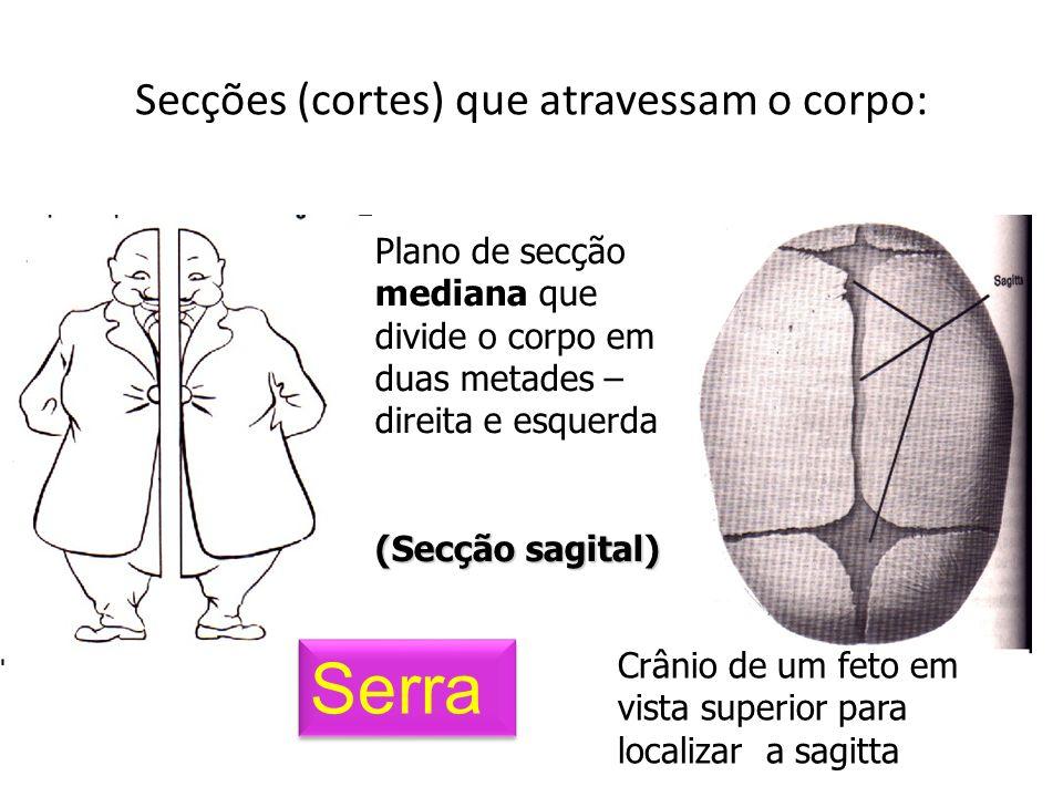 Secções (cortes) que atravessam o corpo: Plano de secção mediana que divide o corpo em duas metades – direita e esquerda (Secção sagital) Crânio de um