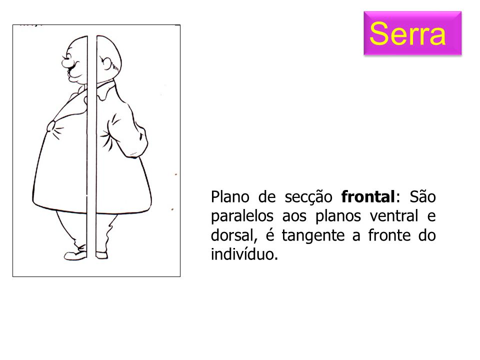 Plano de secção frontal: São paralelos aos planos ventral e dorsal, é tangente a fronte do indivíduo. Serra