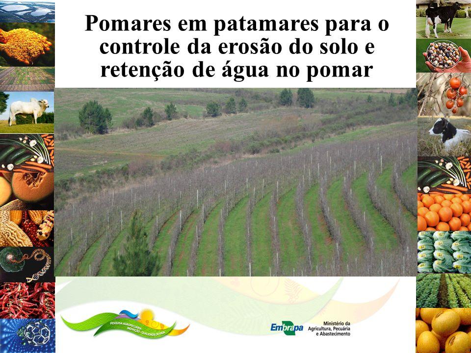 Pomares em patamares para o controle da erosão do solo e retenção de água no pomar