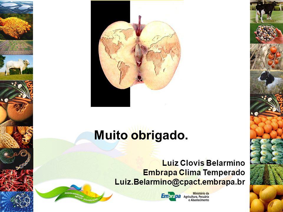 Luiz Clovis Belarmino Embrapa Clima Temperado Luiz.Belarmino@cpact.embrapa.br Muito obrigado.