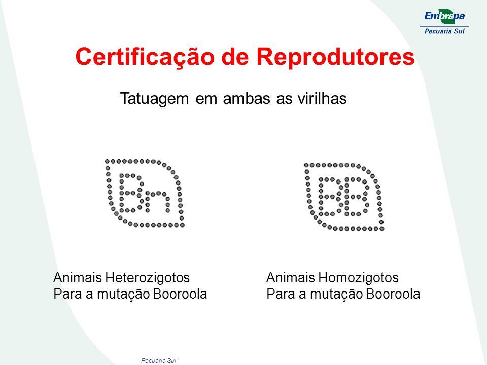 Certificação de Reprodutores Animais Heterozigotos Para a mutação Booroola Animais Homozigotos Para a mutação Booroola Tatuagem em ambas as virilhas P