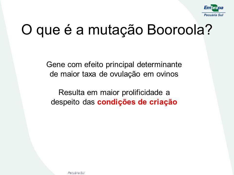 O que é a mutação Booroola? Gene com efeito principal determinante de maior taxa de ovulação em ovinos Resulta em maior prolificidade a despeito das c