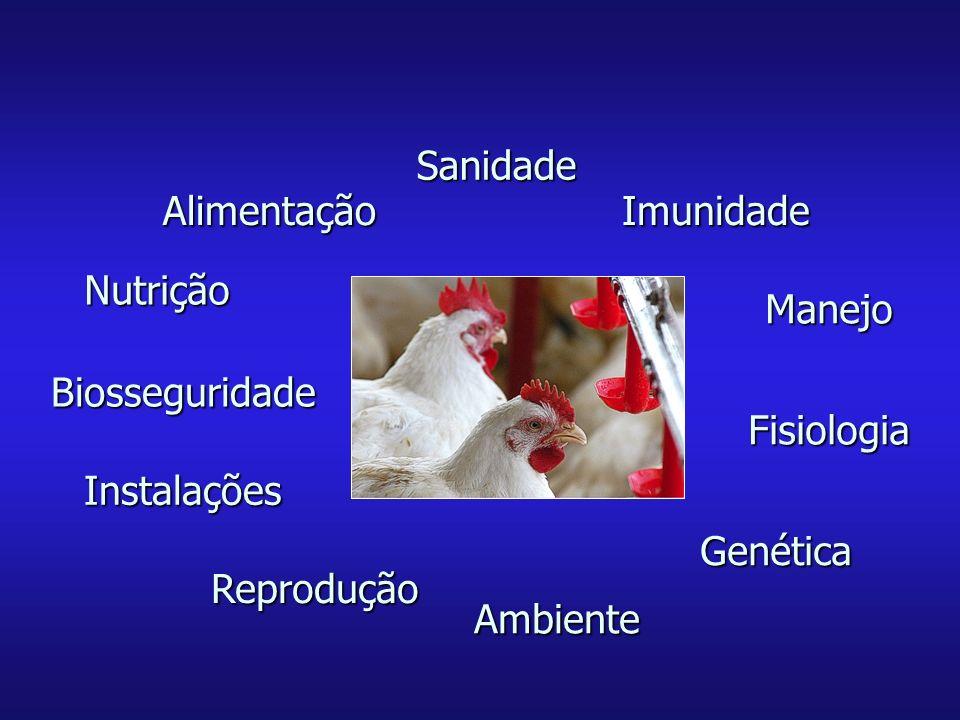 Biosseguridade Nutrição Instalações Reprodução Ambiente Genética Fisiologia ImunidadeAlimentação Sanidade Manejo