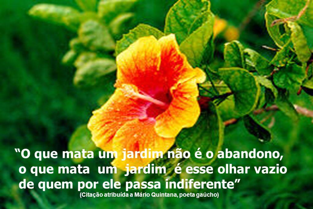 O que mata um jardim não é o abandono, o que mata um jardim é esse olhar vazio de quem por ele passa indiferente (Citação atribuída a Mário Quintana,