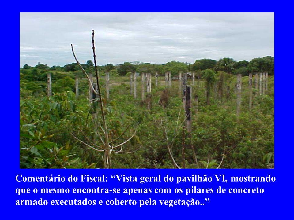 Comentário do Fiscal: Vista geral do pavilhão VI, mostrando que o mesmo encontra-se apenas com os pilares de concreto armado executados e coberto pela vegetação..