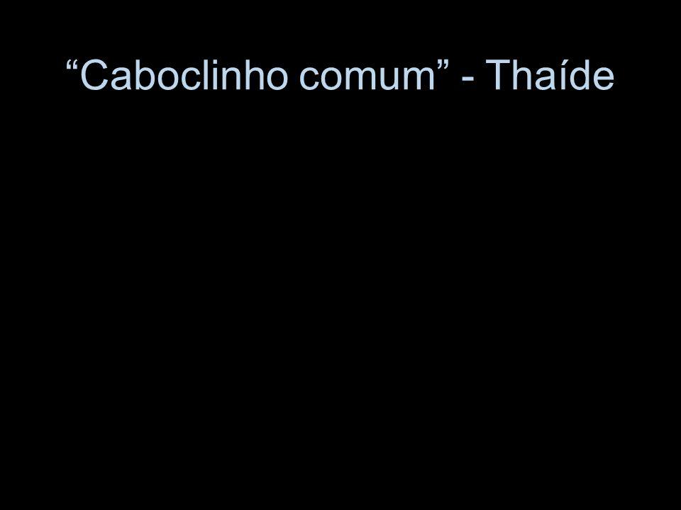 Caboclinho comum - Thaíde