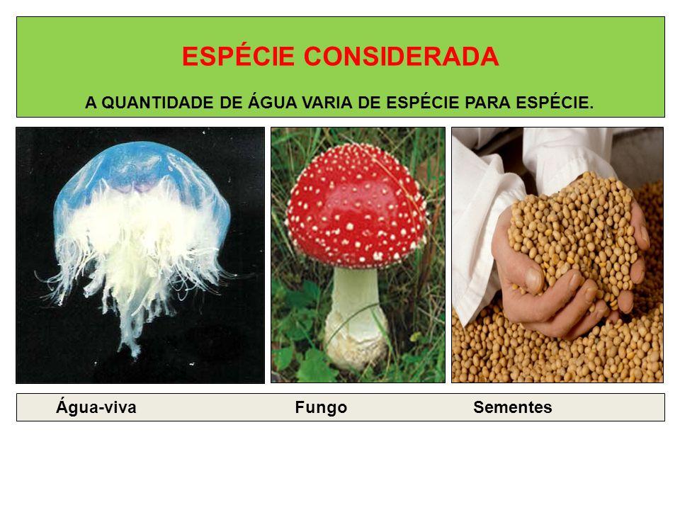 ESPÉCIE CONSIDERADA A QUANTIDADE DE ÁGUA VARIA DE ESPÉCIE PARA ESPÉCIE. Água-viva Fungo Sementes