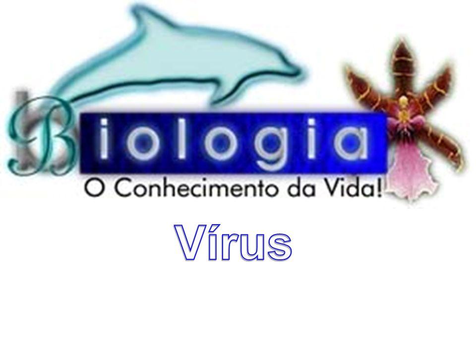 Vírus e Doenças Associadas 9) Principais VirosesRaiva Agente Etiológico: Vírus da raiva Forma de transmissão: Contato com a saliva de animais (mamíferos) doentes, principalmente através de mordidas.