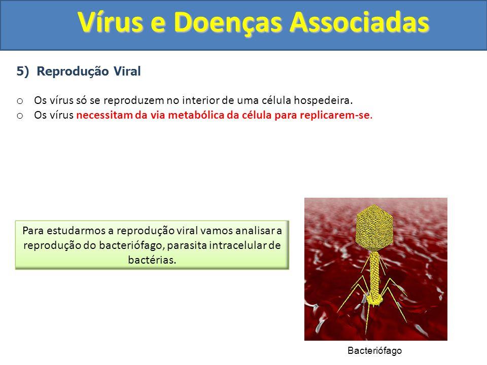 Vírus e Doenças Associadas 5) Reprodução Viral o Os vírus só se reproduzem no interior de uma célula hospedeira.
