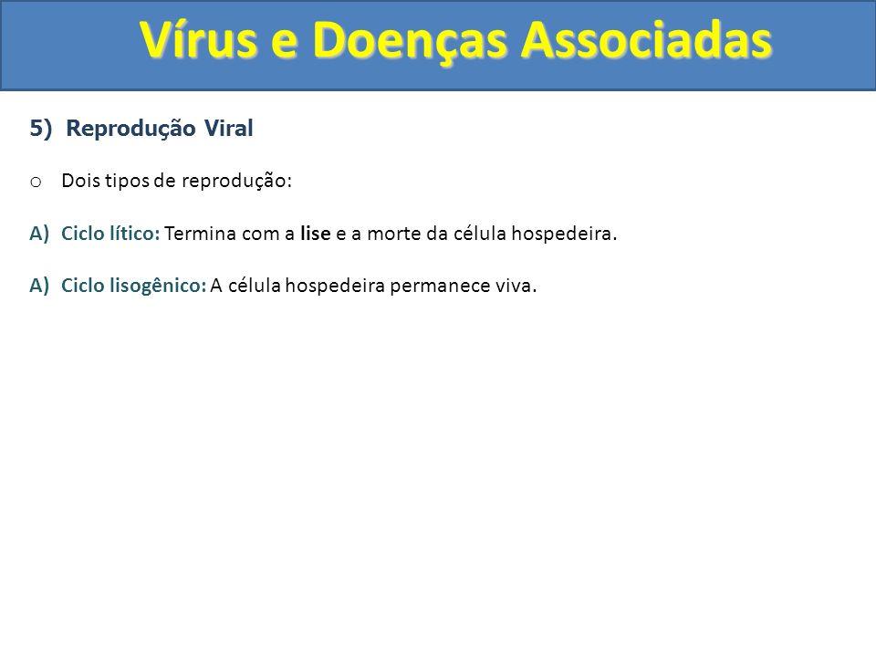 Vírus e Doenças Associadas 5) Reprodução Viral o Dois tipos de reprodução: A)Ciclo lítico: Termina com a lise e a morte da célula hospedeira. A)Ciclo