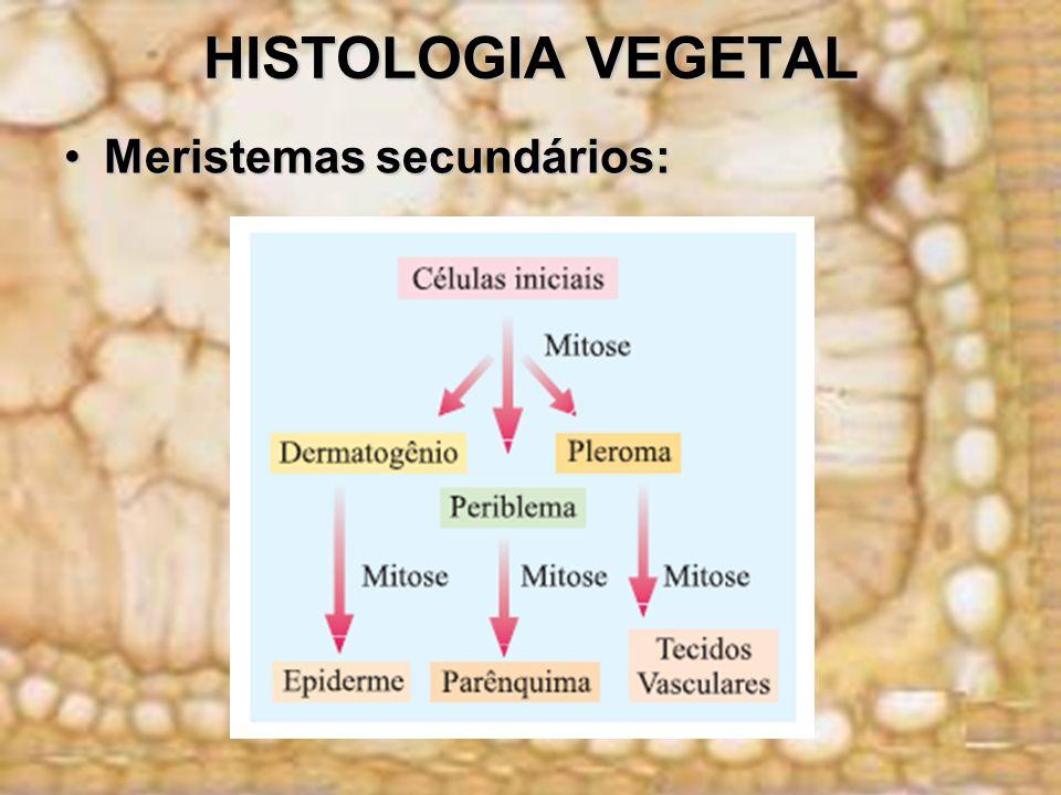 HISTOLOGIA VEGETAL Meristemas secundários:Meristemas secundários:
