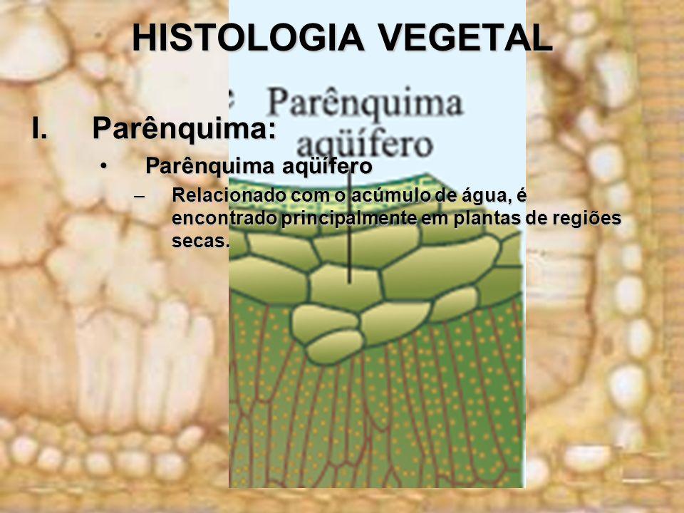 HISTOLOGIA VEGETAL I.Parênquima: Parênquima aqüíferoParênquima aqüífero –Relacionado com o acúmulo de água, é encontrado principalmente em plantas de