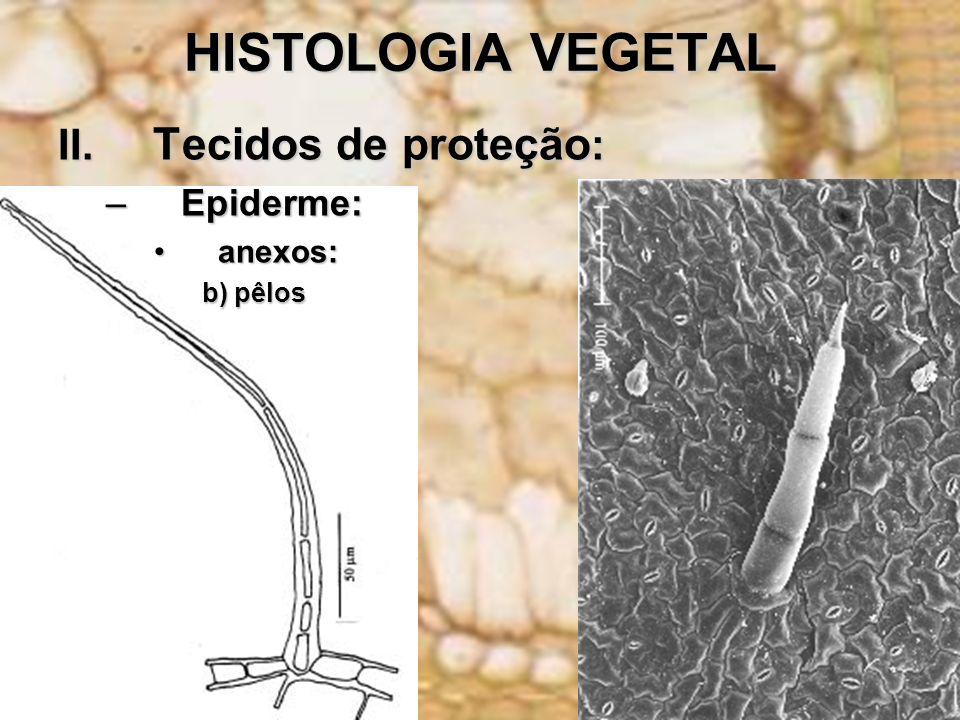 HISTOLOGIA VEGETAL II. Tecidos de proteção : –Epiderme: anexos:anexos: b) pêlos
