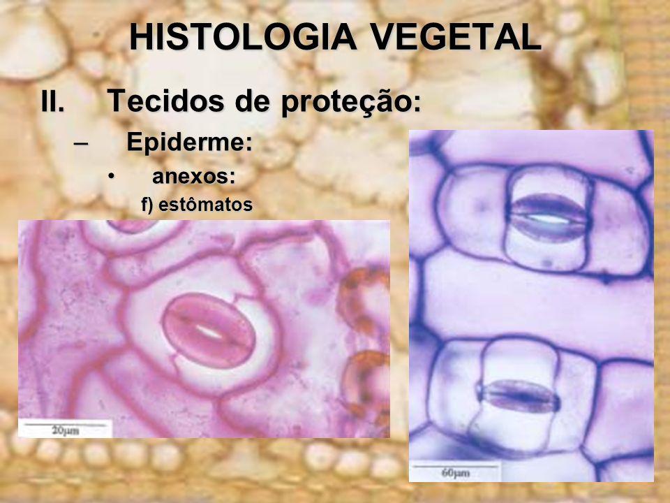 HISTOLOGIA VEGETAL II. Tecidos de proteção : –Epiderme: anexos:anexos: f) estômatos