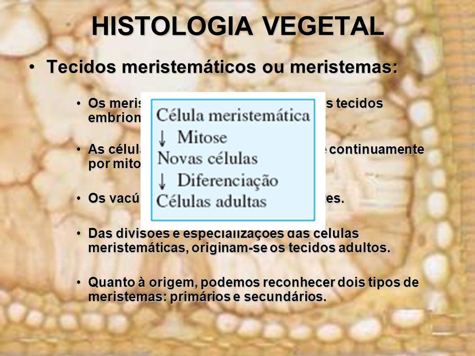 HISTOLOGIA VEGETAL Tecidos meristemáticos ou meristemas:Tecidos meristemáticos ou meristemas: Os meristemas são também chamados tecidos embrionários.O