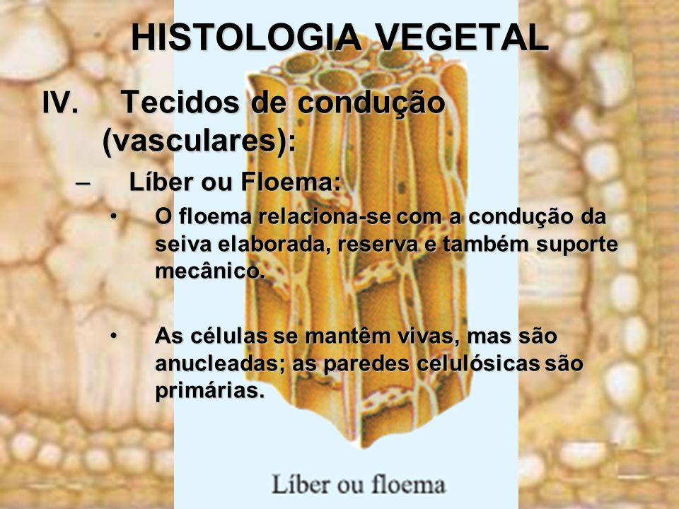 HISTOLOGIA VEGETAL IV. Tecidos de condução (vasculares) : –Líber ou Floema: O floema relaciona-se com a condução da seiva elaborada, reserva e também