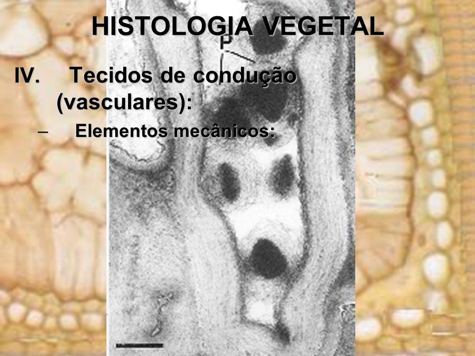 HISTOLOGIA VEGETAL IV. Tecidos de condução (vasculares) : –Elementos mecânicos: