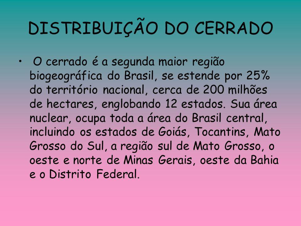 DISTRIBUIÇÃO DO CERRADO O cerrado é a segunda maior região biogeográfica do Brasil, se estende por 25% do território nacional, cerca de 200 milhões de