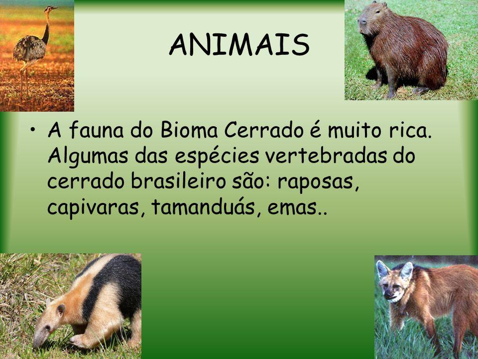 ANIMAIS A fauna do Bioma Cerrado é muito rica. Algumas das espécies vertebradas do cerrado brasileiro são: raposas, capivaras, tamanduás, emas..