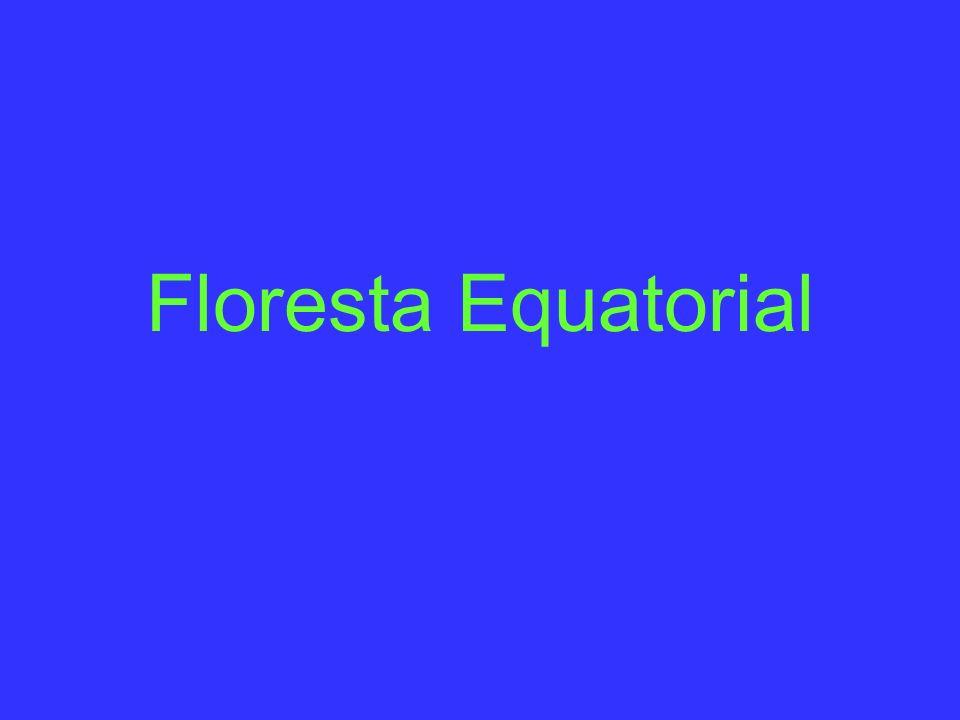 O que é a Floresta Equatorial.