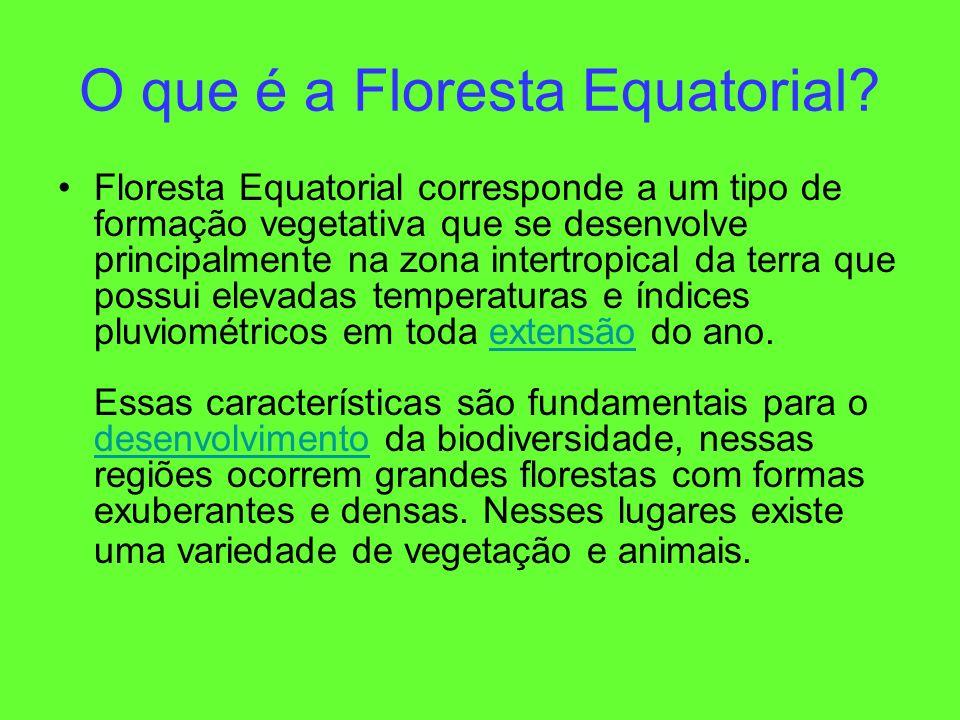 O que é a Floresta Equatorial? Floresta Equatorial corresponde a um tipo de formação vegetativa que se desenvolve principalmente na zona intertropical