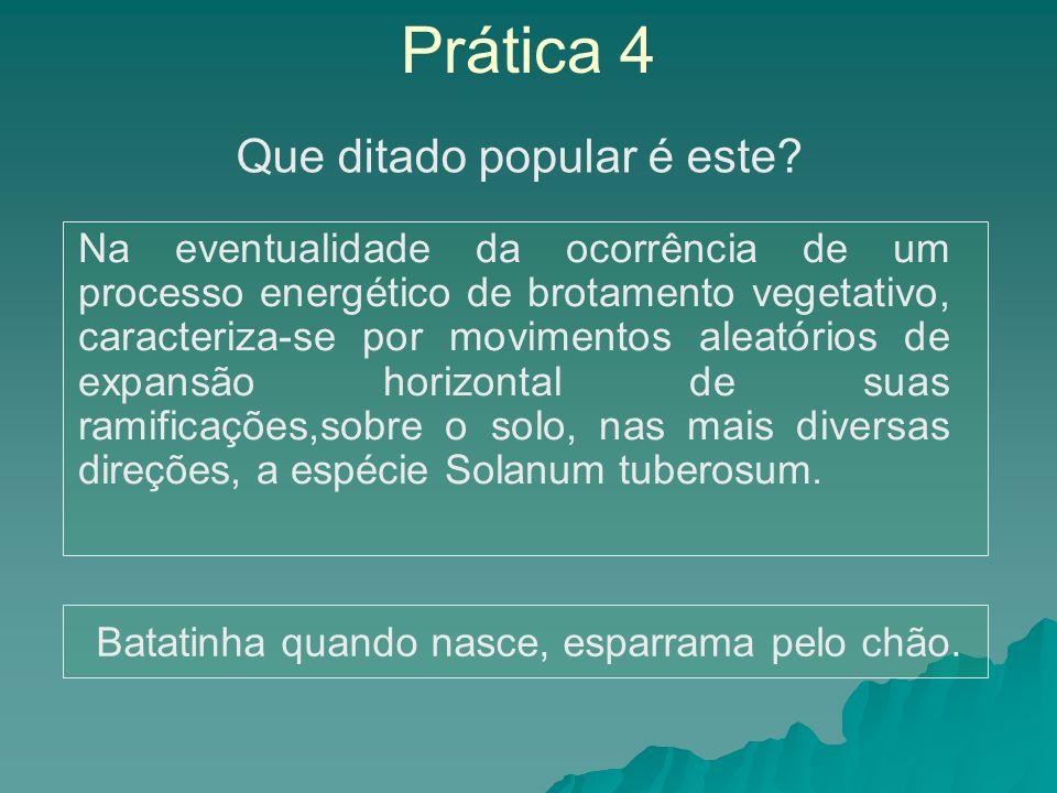 Prática 4 Na eventualidade da ocorrência de um processo energético de brotamento vegetativo, caracteriza-se por movimentos aleatórios de expansão hori
