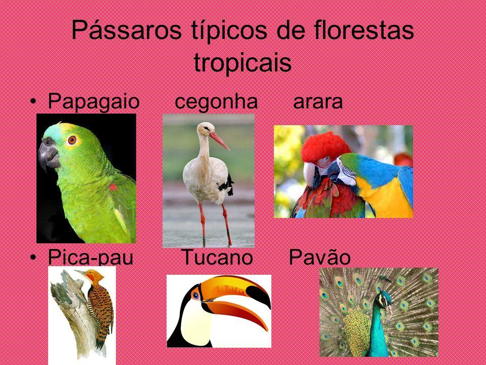 Pássaros típicos de florestas tropicais Papagaio cegonha arara Pica-pau Tucano Pavão