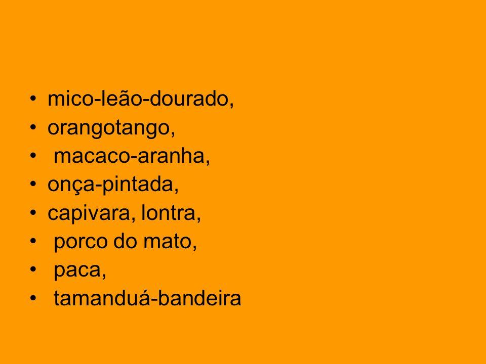 mico-leão-dourado, orangotango, macaco-aranha, onça-pintada, capivara, lontra, porco do mato, paca, tamanduá-bandeira