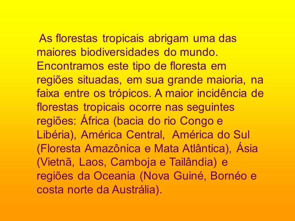 As florestas tropicais abrigam uma das maiores biodiversidades do mundo. Encontramos este tipo de floresta em regiões situadas, em sua grande maioria,