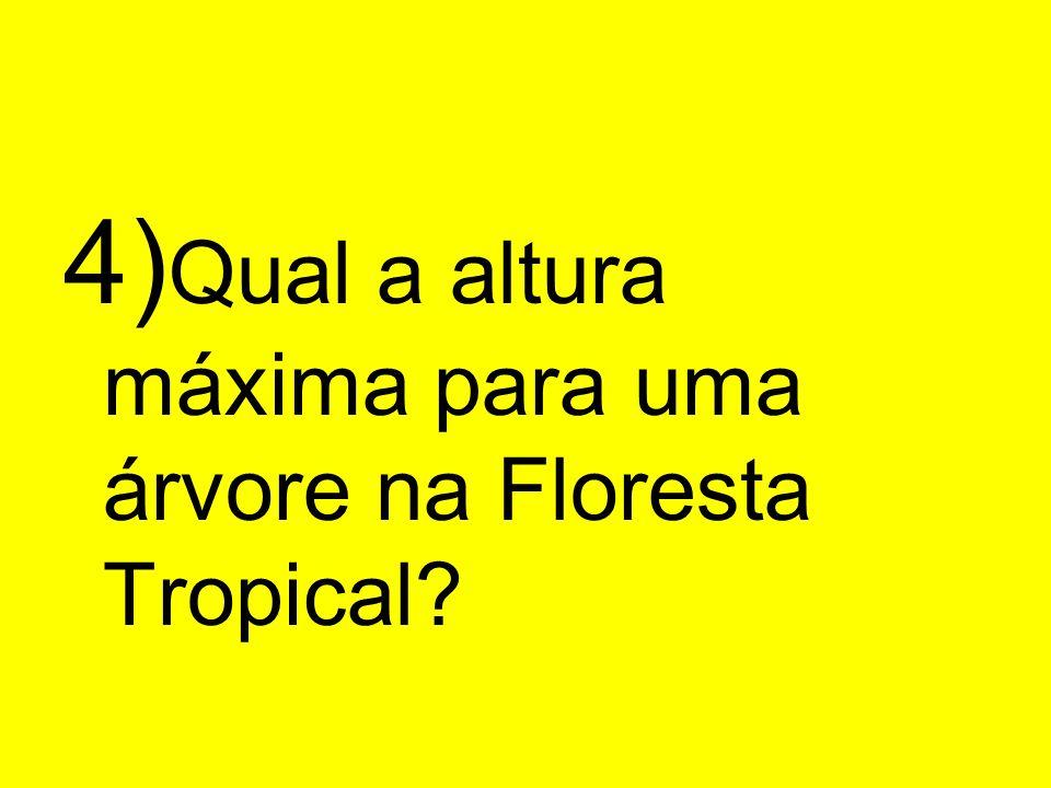 4) Qual a altura máxima para uma árvore na Floresta Tropical?