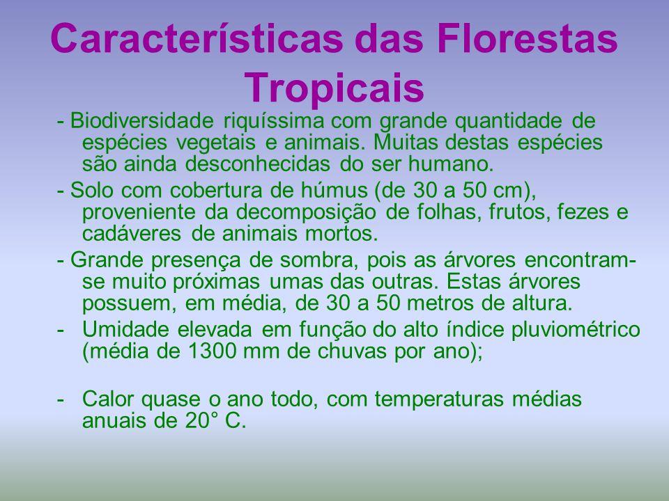 Características das Florestas Tropicais - Biodiversidade riquíssima com grande quantidade de espécies vegetais e animais. Muitas destas espécies são a