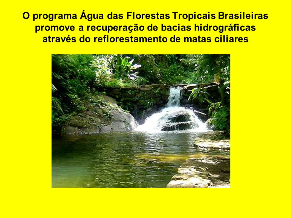 Floresta tropical da Malásia