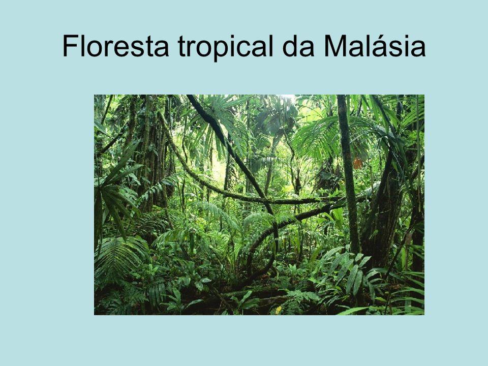 Floresta tropical da Malásia