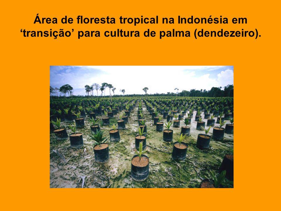 Área de floresta tropical na Indonésia em transição para cultura de palma (dendezeiro).